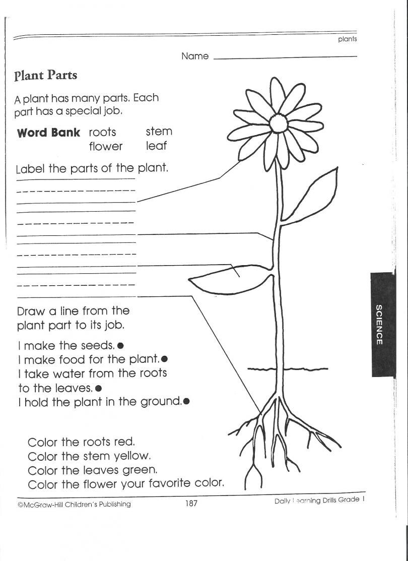 1St Grade Science Worksheets | Picking Apart Plants - People | Growing And Changing Printable Worksheets