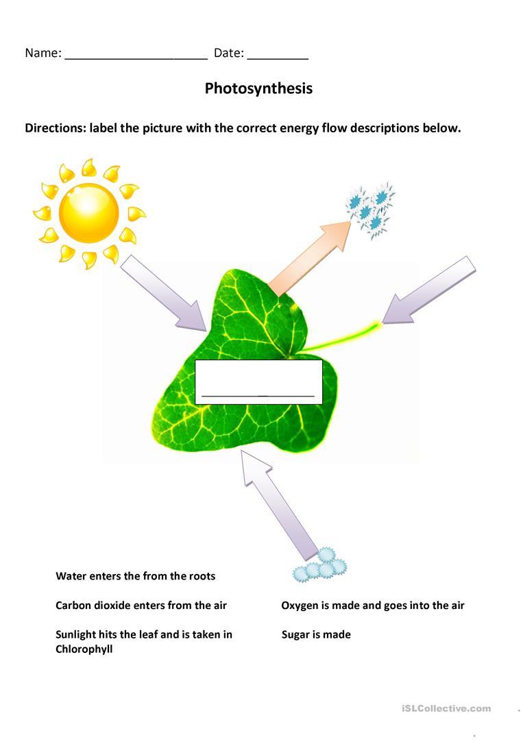2 Free Esl Photosynthesis Worksheets   Free Printable Photosynthesis Worksheets