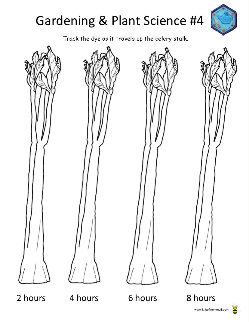 Ahg Badge Help – Gardening And Plant Science #4     Celery Experiment Printable Worksheet