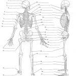 Anatomy Labeling Worksheets   Google Search | I Heart Anatomy | Free Printable Human Anatomy Worksheets