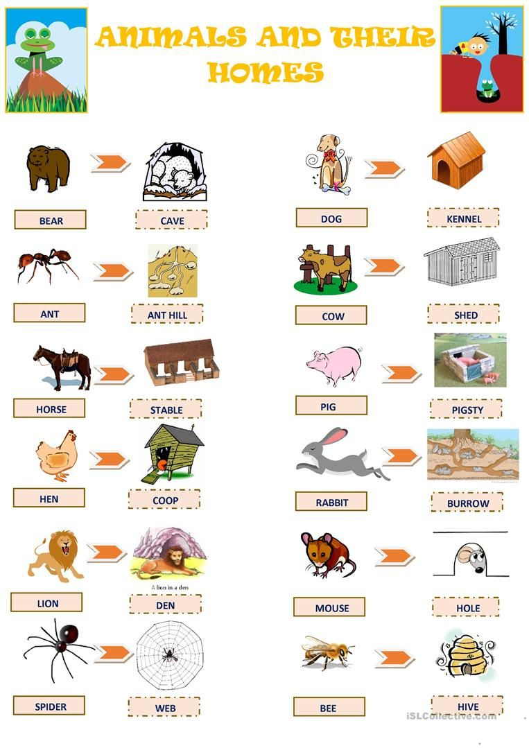 Animals And Their Homes Worksheet - Free Esl Printable Worksheets | Free Printable Worksheets Animal Adaptations