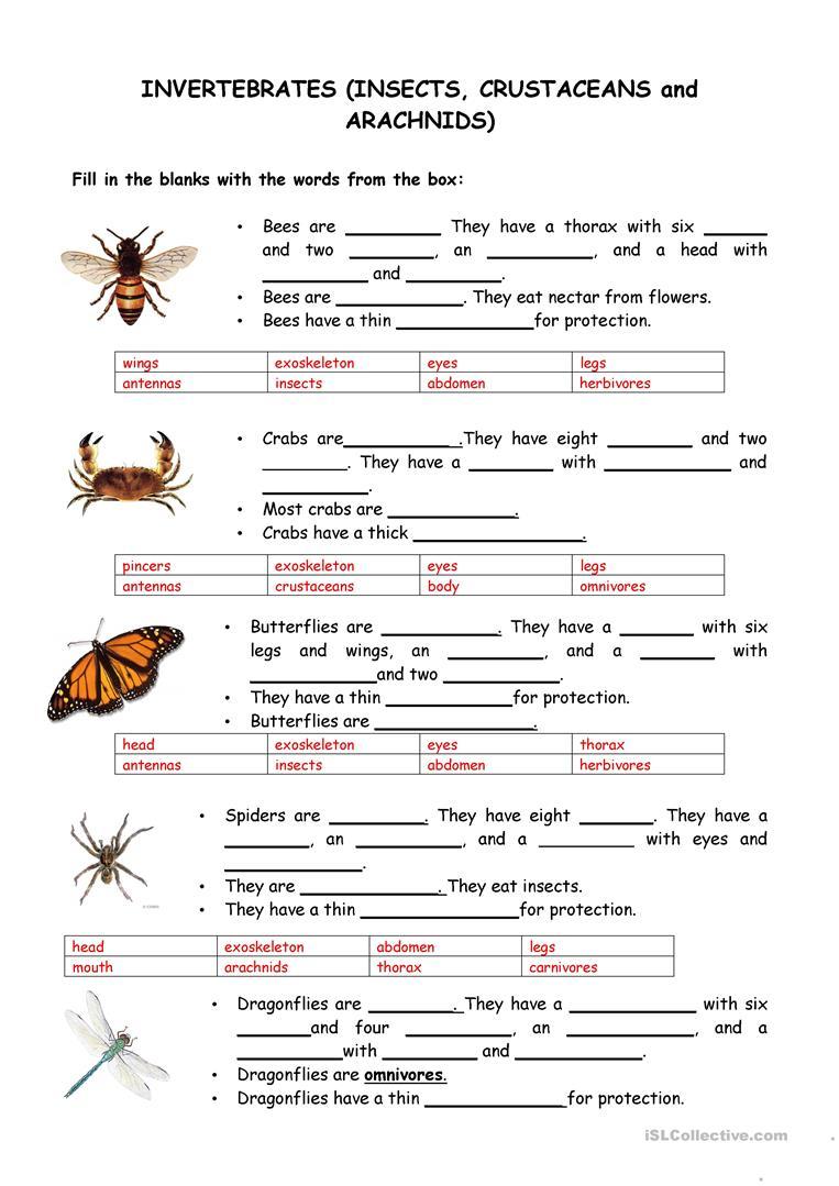 Animals-Vertebrates And Invertebrates Worksheet - Free Esl Printable | Free Printable Worksheets On Vertebrates And Invertebrates