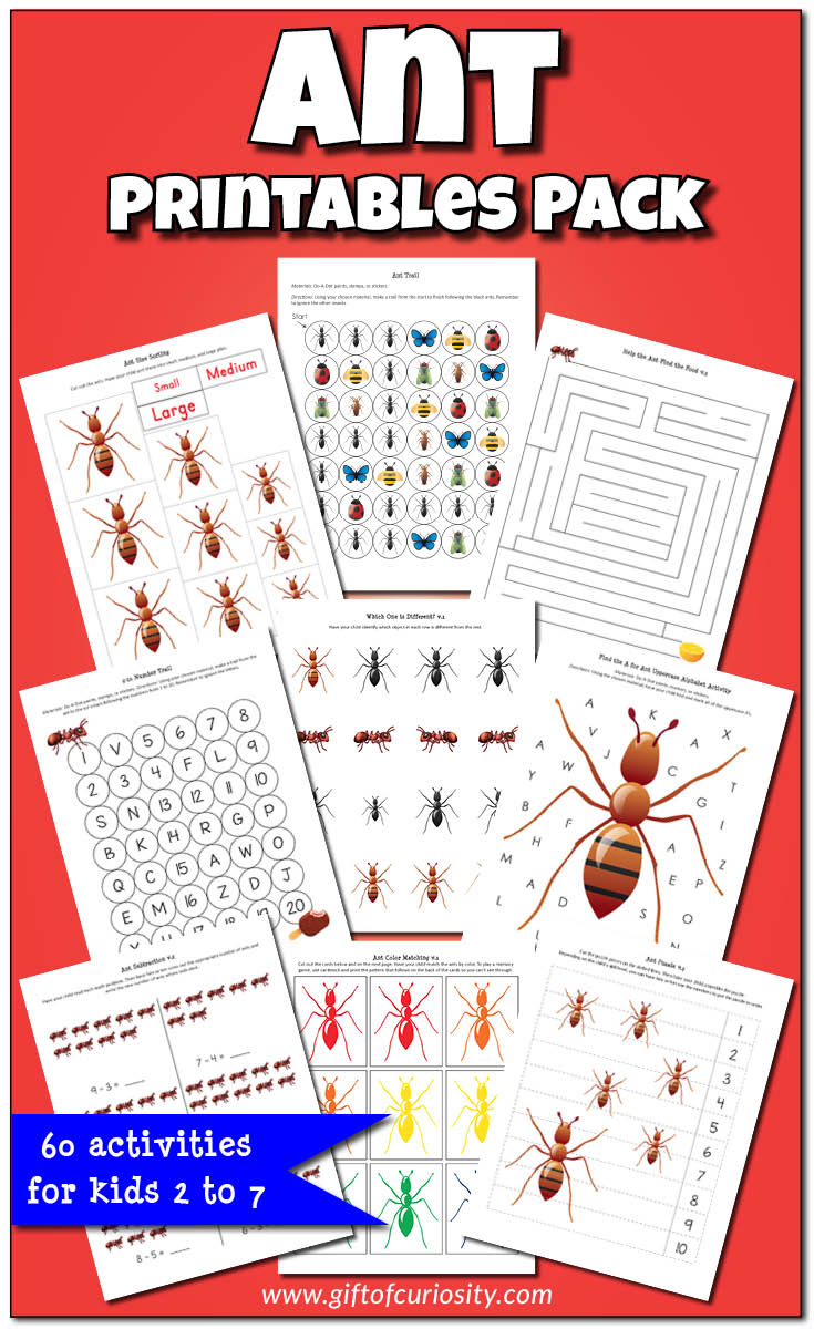 Ant Printables Pack {Insect Printables} - Gift Of Curiosity | Ant Worksheets Printables
