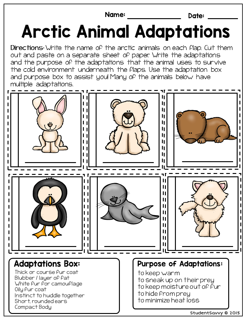 Arctic Animal - Free Resource | Teaching Freebies | Animal | Free Printable Worksheets Animal Adaptations