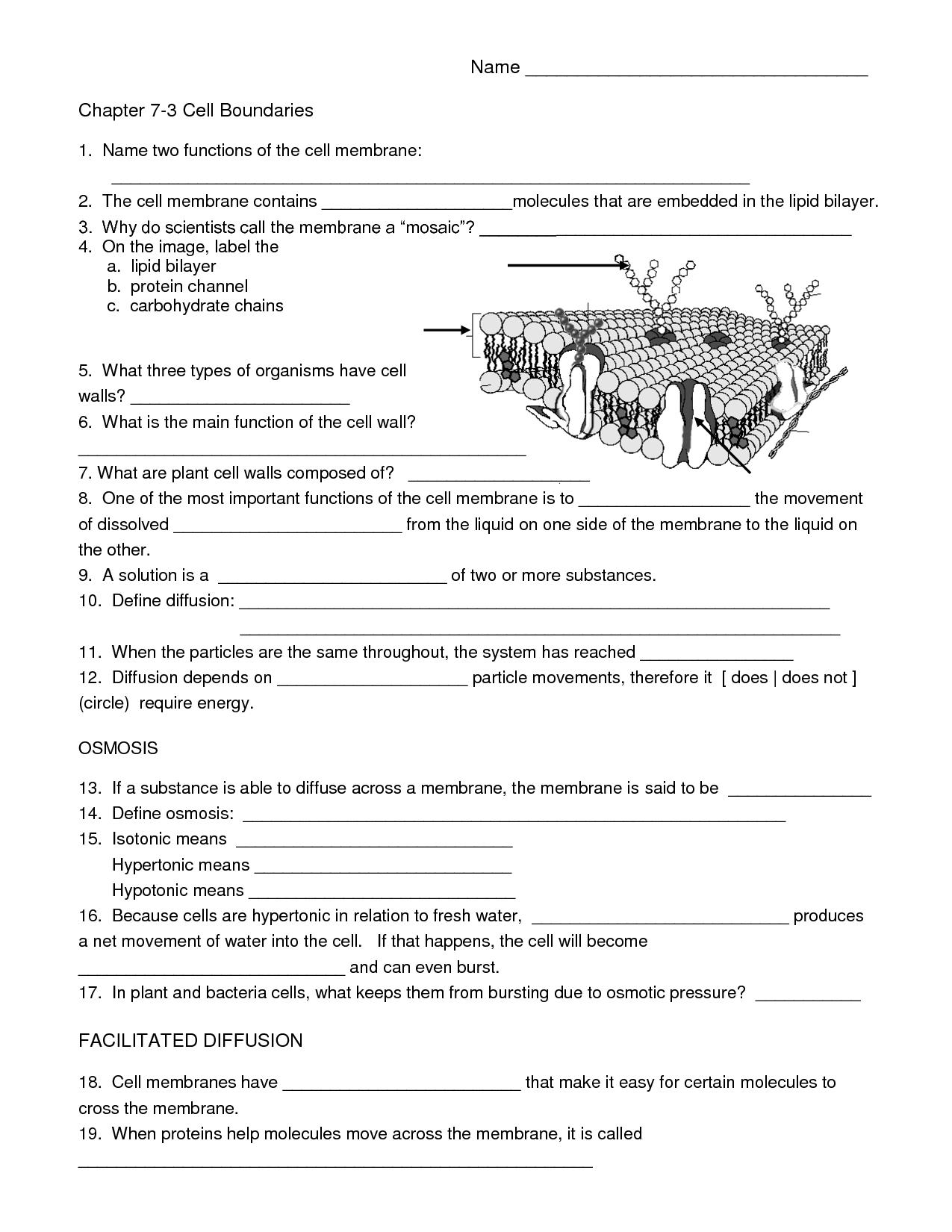 Biology Cell Worksheets | Carpe Diem Science | Science Worksheets | Free Printable High School Worksheets