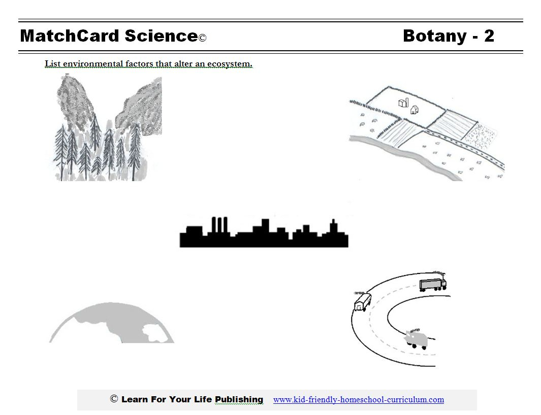 Botany Science Projects   Celery Experiment Printable Worksheet