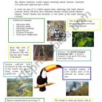 Facts About Amazon Rainforest   Esl Worksheetathos466 | Rainforest Printable Worksheets