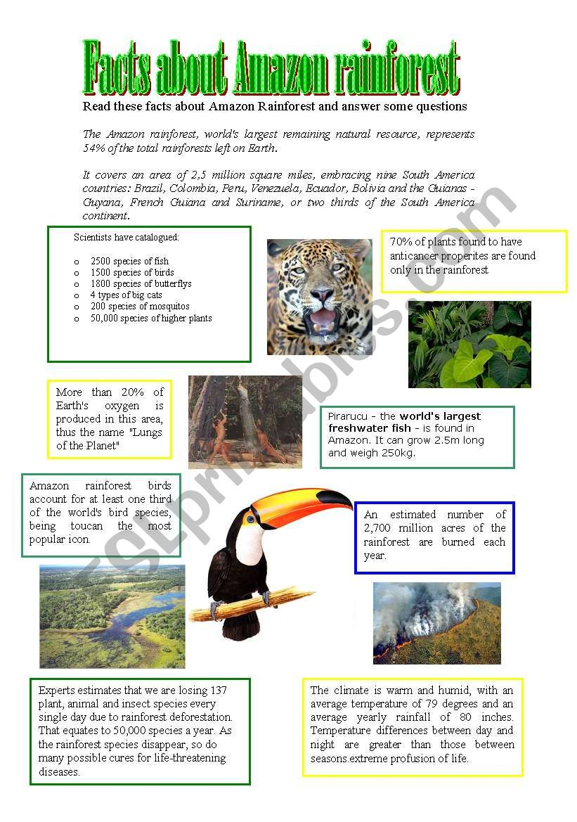 Facts About Amazon Rainforest - Esl Worksheetathos466 | Rainforest Printable Worksheets