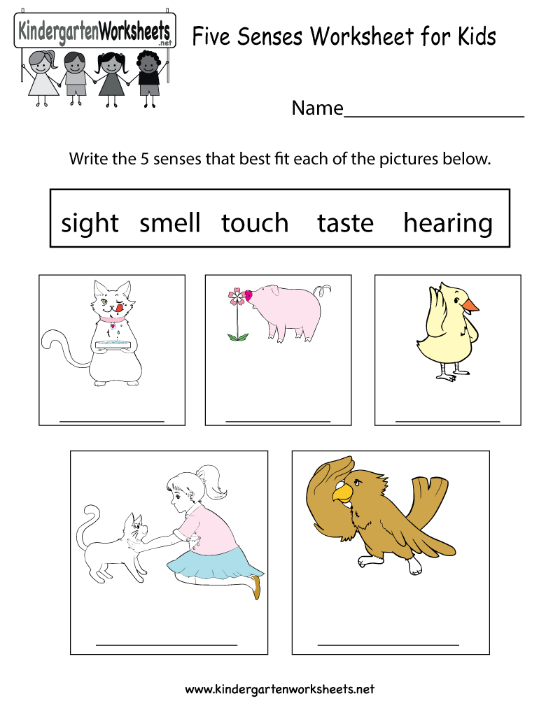 Five Senses Worksheet For Kids - Free Kindergarten Learning Worksheet   Science Worksheets For Kindergarten Free Printable