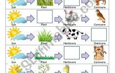 Food Chain Printable Worksheets