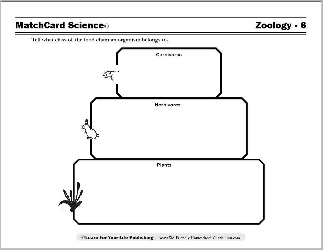 Food Chain Worksheets | Food Chain Printable Worksheets