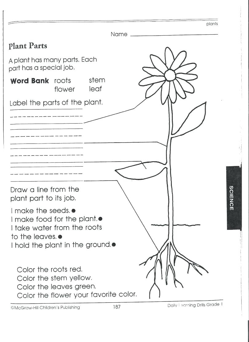 Food Coloring Flower Experiment Worksheet | Bahangit.co | Celery Experiment Printable Worksheet