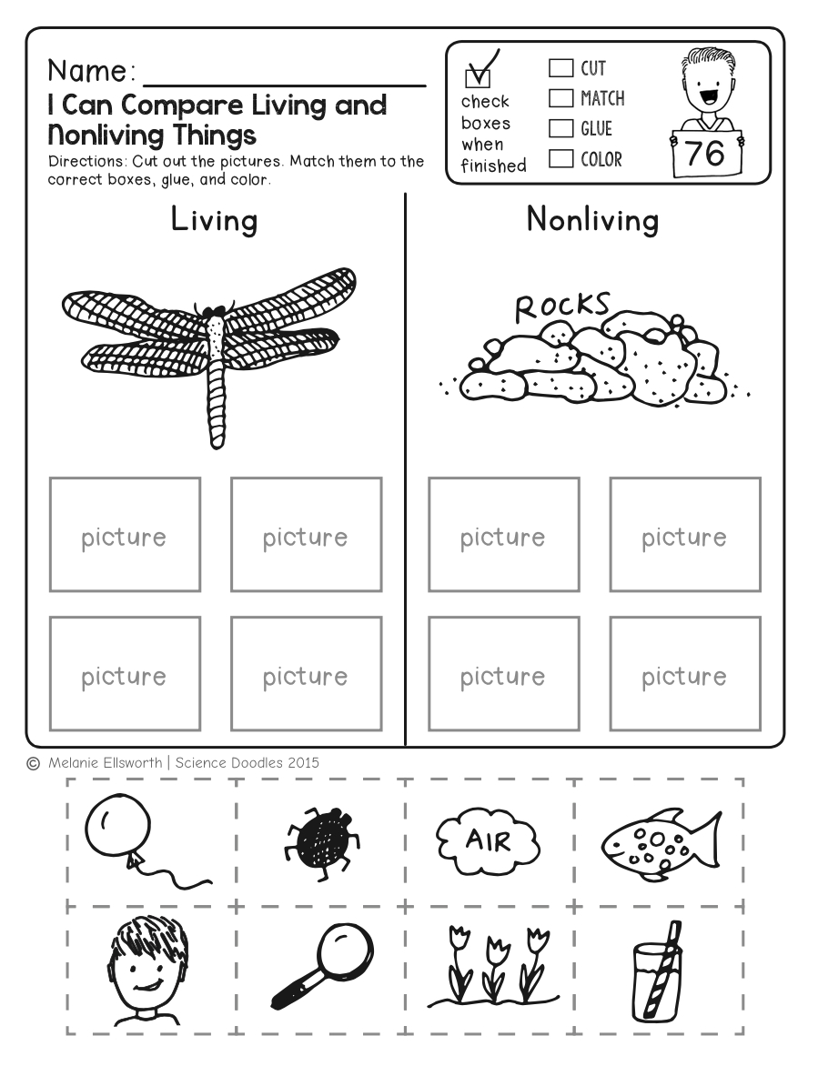 Freebie! No-Prep Kindergarten Science Doodle Printables | T E A C H | Kindergarten Science Worksheets Printable