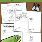 Frog Life Cycle Worksheets   Mamas Learning Corner | Life Cycle Of A Frog Free Printable Worksheets