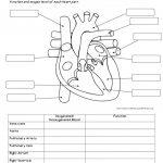 Human Anatomy Labeling Worksheets Human Body System Labeling   Free | Free Printable Human Anatomy Worksheets