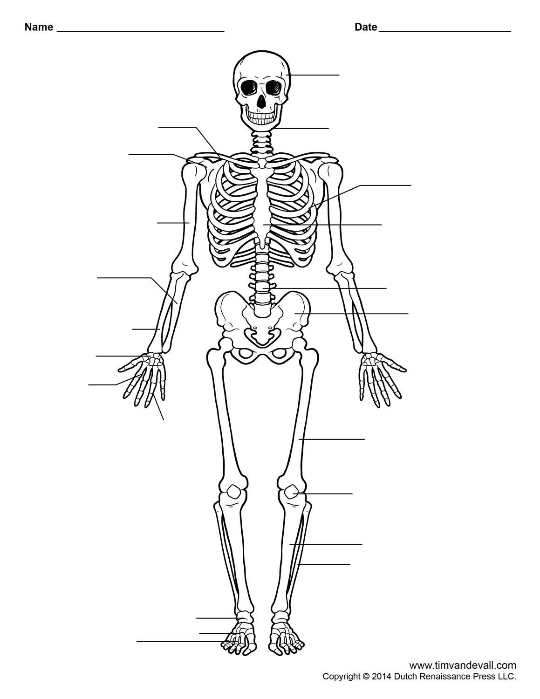 Human Skeleton Worksheet | Homeschool-Science | Human Skeleton | Free Printable Human Anatomy Worksheets