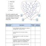 Ks4 | Rivers | Teachit Geography | River Worksheets Printables