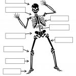 Label The Skeleton Worksheet – Free Esl Printable Worksheets Made | Human Skeleton Printable Worksheet
