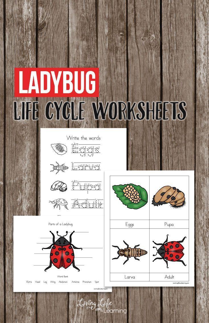 Ladybug Life Cycle Worksheets For Kids | Homeschool Printables | Free Printable Ladybug Life Cycle Worksheets