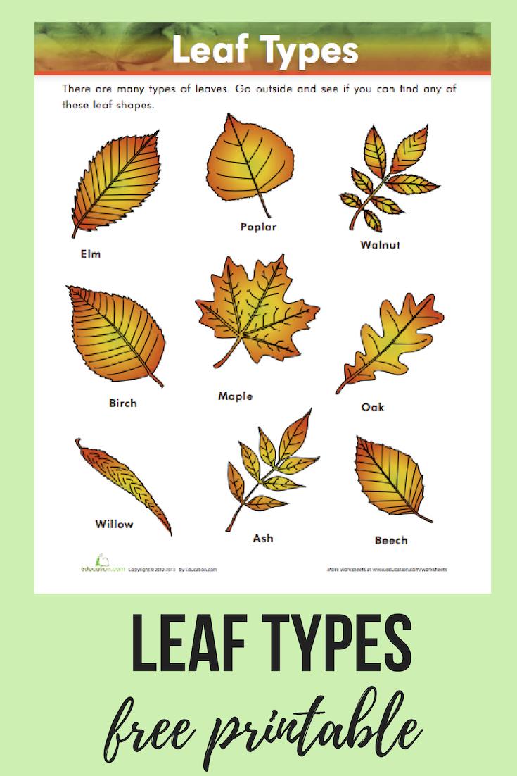 Leaf Types | Homeschool | Pinterest | Science, Education And Worksheets | Free Printable Leaf Worksheets