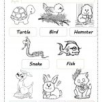 Pets Worksheet   Free Esl Printable Worksheets Madeteachers | Pets Worksheets Printables