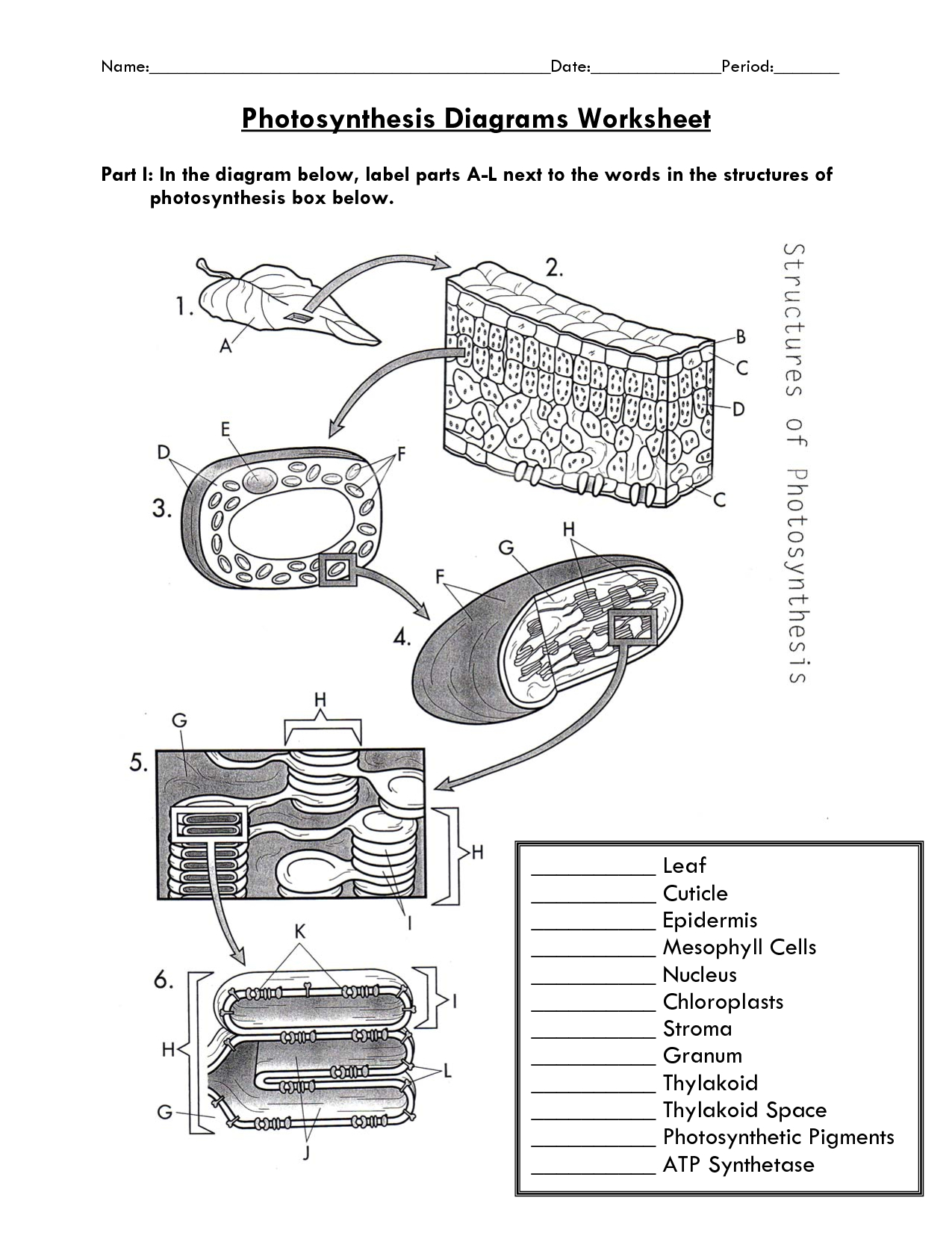 Photosynthesis Diagram Worksheet   Biology Photosynthesis   Free Printable Photosynthesis Worksheets
