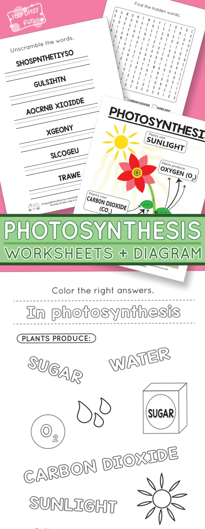 Photosynthesis Worksheets For Kids   Homeschooling Ideas   Free Printable Photosynthesis Worksheets