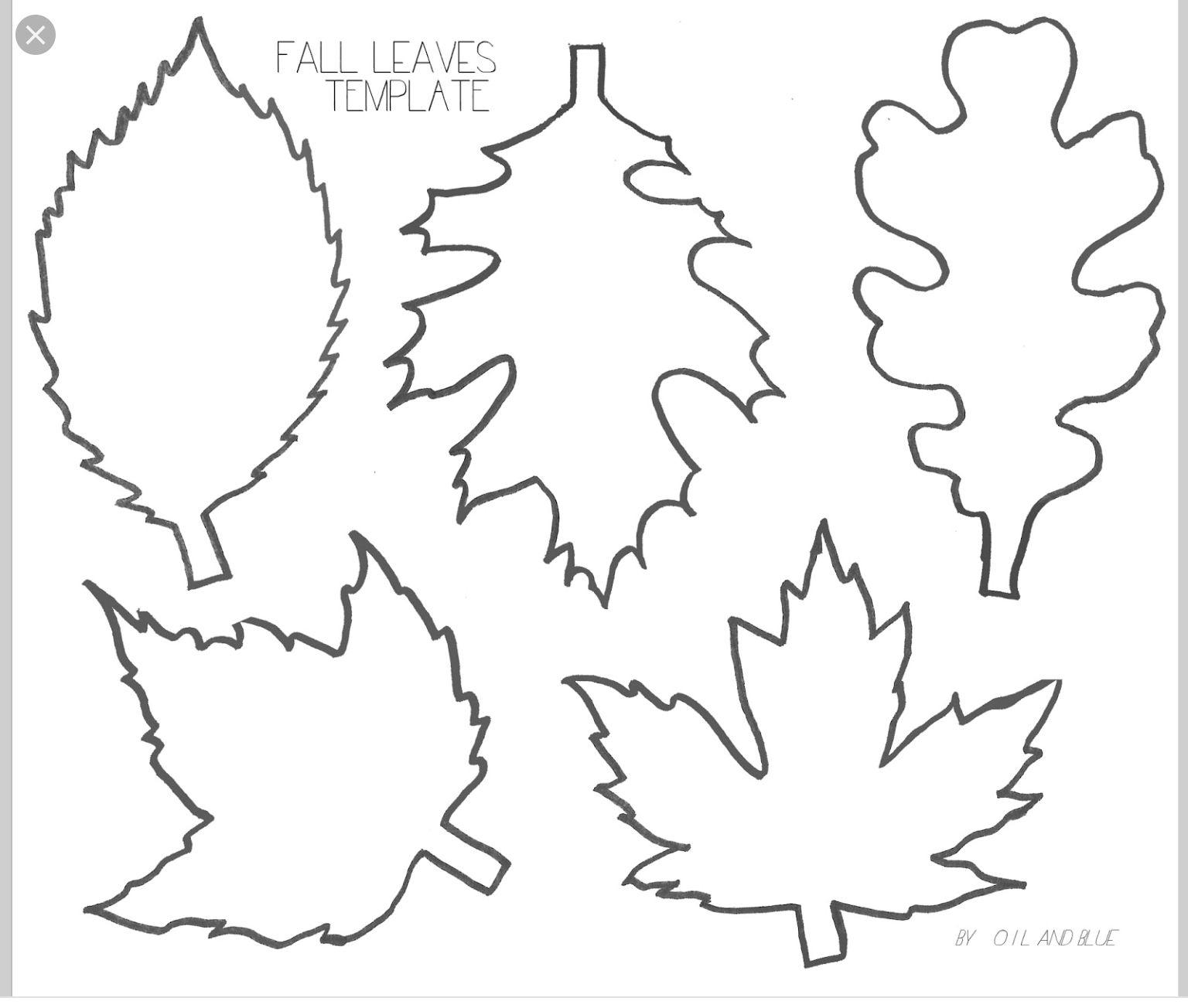 Pinlucie Davis On Skolka Worksheets | Leaf Template, Leaf - Free | Free Printable Leaf Worksheets