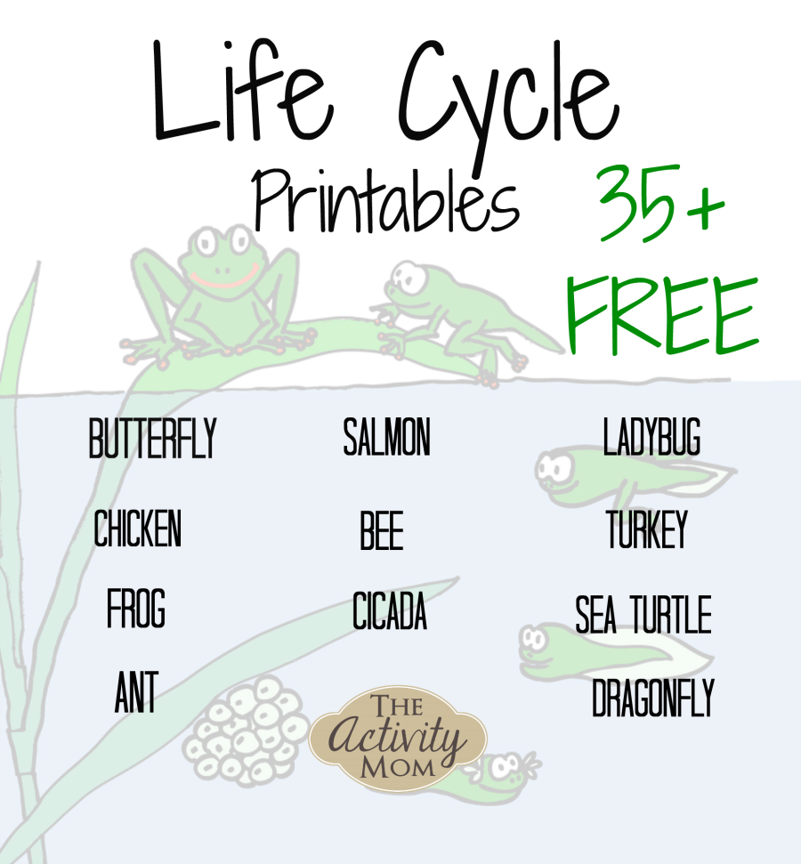 The Activity Mom - Life Cycles Printable - The Activity Mom | Free Printable Ladybug Life Cycle Worksheets