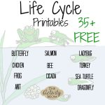 The Activity Mom   Life Cycles Printable   The Activity Mom | Life Cycle Of A Frog Free Printable Worksheets