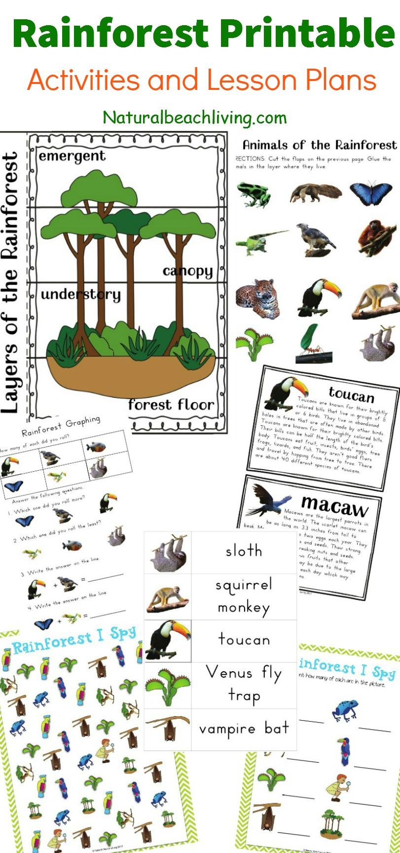 The Best Rainforest Printable Activities For Kids - Natural Beach Living | Rainforest Printable Worksheets
