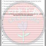 Understanding Adjectives Worksheets   No Prep Printables | Softball Worksheets Printable