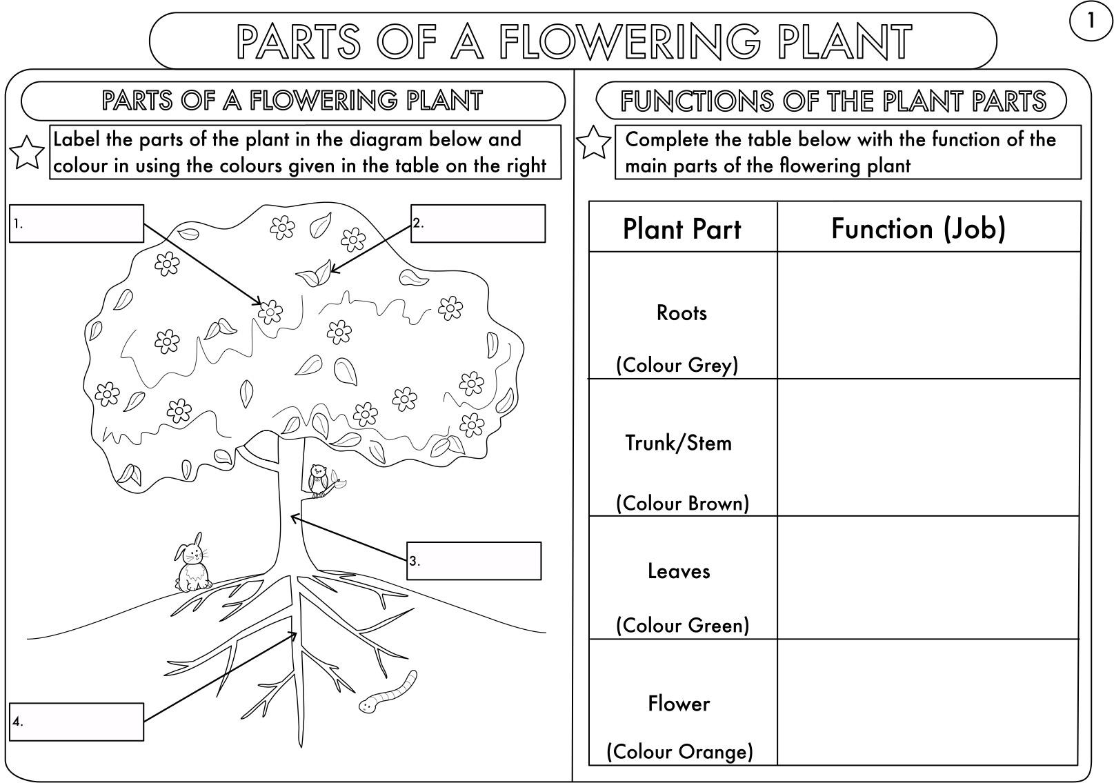 Year 3 Science: Parts Of A Plant Worksheetbeckystoke | Teaching | Science Worksheets Ks2 Printable