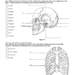 Labeling !!! Is Fun! | Anatomy Coloring Book, Anatomy And | Printable Anatomy Labeling Worksheets