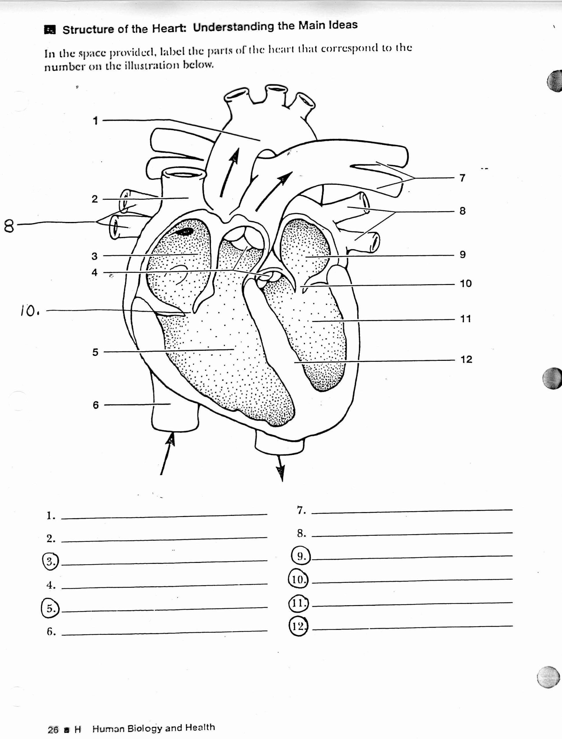 Printable Anatomy Labeling Worksheets Human Heart Coloring | Printable Anatomy Labeling Worksheets