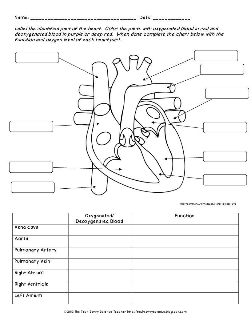 Printable Anatomy Labeling Worksheets In 2020 | Human Body | Printable Anatomy Labeling Worksheets