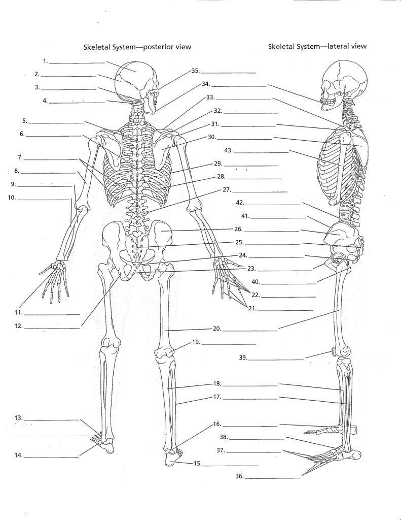 Unlabed Skull Inferior View | Anatomy Practice Worksheets | Printable Anatomy Labeling Worksheets